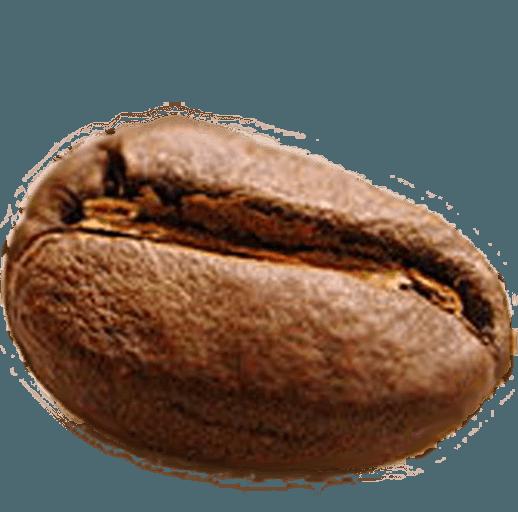 發現咖啡店的365天specialtycoffee